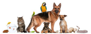 group-pets-sitting-front-white-background-19571764